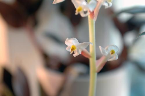 En blomma för Tea, en internetvän som inte längre finns bland oss